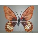 Křídla motýlí hnědá 1164031A-Li